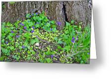 Violets Greeting Card