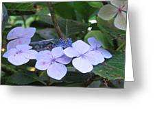 Violets O The Green Greeting Card