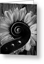 Violin Scroll And Sunflower In Black And White Greeting Card