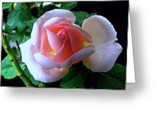 Virgin Pink Rose With Thorns Greeting Card