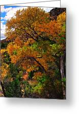 Virgin River Triptych Right Panel Greeting Card