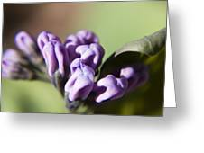 Virginia Bluebell Buds Greeting Card
