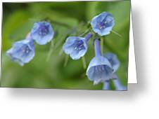 Virginia Bluebells I Greeting Card