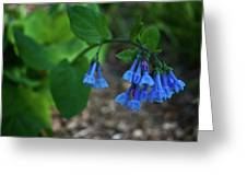 Virginia Bluebells In The Early Morning Greeting Card