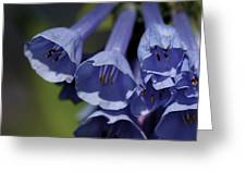 Virginia Bluebells Greeting Card