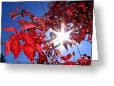 Virginia Creeper Sunburst Greeting Card