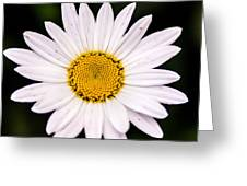 Virginia Daisy Greeting Card