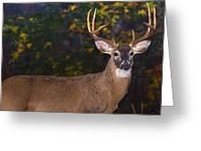 Virginian White Tail Buck Greeting Card