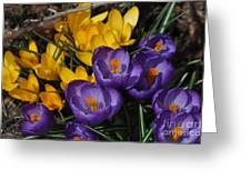 Visions Of Spring Greeting Card