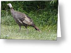 Visions Of Turkey  Greeting Card