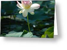 Visit To Lilly Pond 2 Greeting Card
