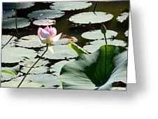 Visit To Lilly Pond Greeting Card