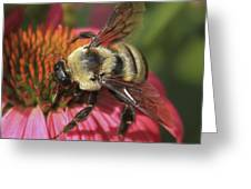 Visitor Up Close Coneflower  Greeting Card