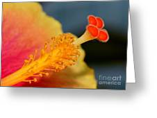 Viva Florida Greeting Card