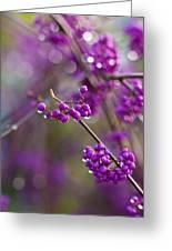 Vivid Beauty Berries Greeting Card