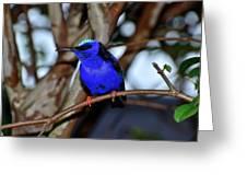 Vivid Blue Greeting Card