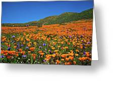 Vivid Memories Of The Walker Canyon Superbloom Greeting Card