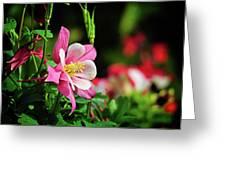 Vivid Pink Columbine Greeting Card