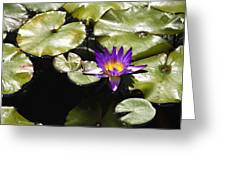 Vivid Purple Water Lilly Greeting Card