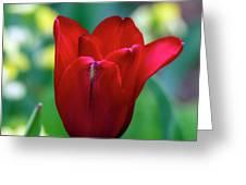 Vivid Red Tulip Greeting Card