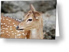 Vividly Soft Greeting Card