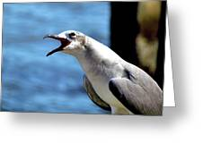 Vocal Sea Gull Greeting Card