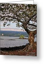 Volcano Through The Tree Greeting Card