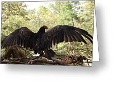 Vulture 429 Greeting Card