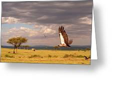 Vulture On The Mara Greeting Card