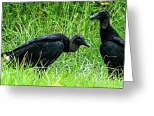 Vulture Pair Greeting Card