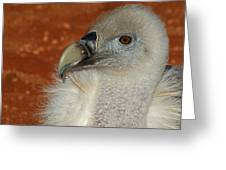 Vulture Portrait Greeting Card