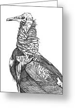Vulture Sketch Greeting Card