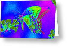 Wacky Butterfly Greeting Card