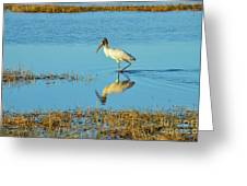 Wadding Wood Stork And Reflection Greeting Card