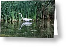 Wading And Waiting Greeting Card