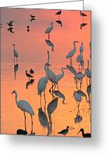 Wading Birds Forage In Colorful Sunset Greeting Card
