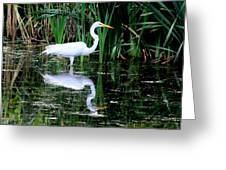 Wading For Food Greeting Card