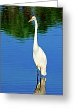 Wading Great White Egret Greeting Card