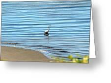 Wading Heron Greeting Card