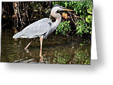 Wading In The Water Greeting Card