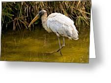 Wading Wood Stork Greeting Card