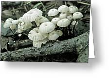 Wagon Wheel Mushroom Colony Greeting Card