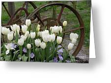 Wagon Wheel Tulips Greeting Card