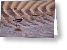 Wagtail On West Sands Greeting Card