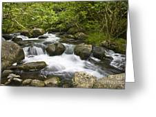 Waihee Valley Stream Greeting Card