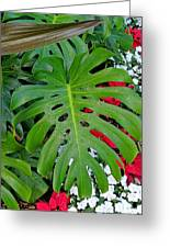 Waikiki Split Leaf Greeting Card