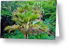 Waimea Palm Study 2 Greeting Card