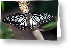 Waiting --- Rice Paper Butterfly Greeting Card