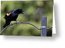Waiting For Suet Greeting Card