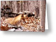 Waiting Fox Greeting Card